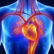 Sistem cardio-vascular