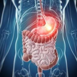 Sistem digestiv