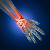 Sistem osteo-articular
