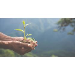 Abundance and Health și plantarea de copaci