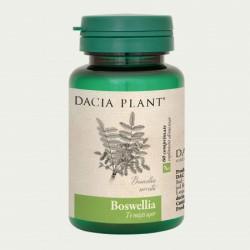 Boswellia (60 comprimate), Dacia Plant