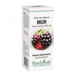 Extract din mladite de mur - Rubus Fructicosus MG=D1 (50 ml), Plantextrakt