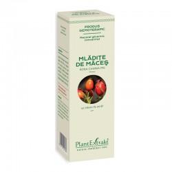 Macerat glicerinic concentrat din mladite de maces - Rosa Canina (15ml), Plantextrakt