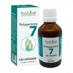 Polygemma 7 - Cai urinare (50 ml), Plantextrakt