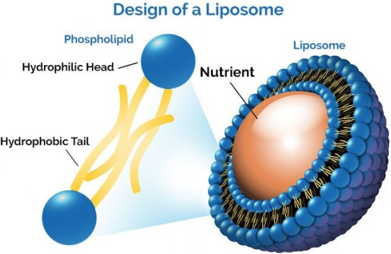 design of a liposome
